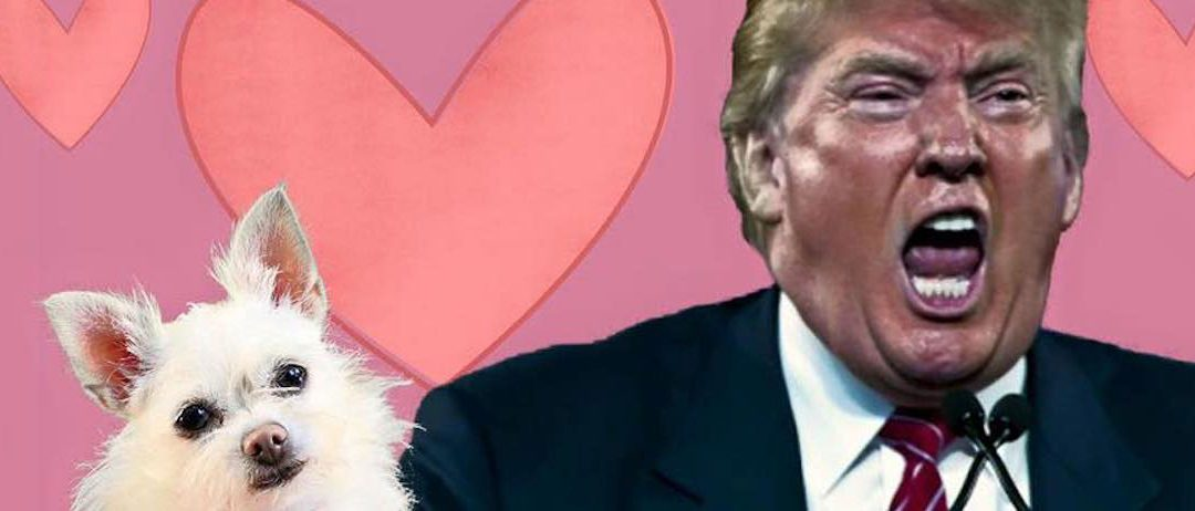 Trump bär hundhuvud – KLIV IN I DIN KRAFT!!